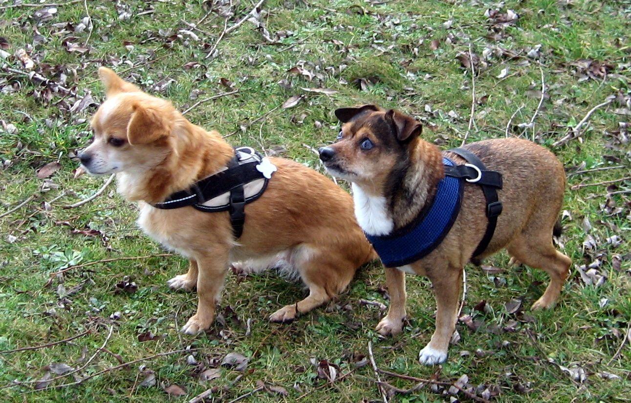 Piki und Max