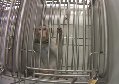Copyright SOKO Tierschutz – Cruelty free international